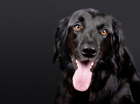 dog-1194087_640